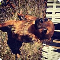 Adopt A Pet :: Cooper - Muskegon, MI