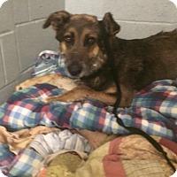 Adopt A Pet :: Lionel - Oak Ridge, NJ