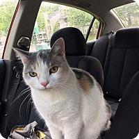 Adopt A Pet :: Benita - Columbia, TN