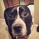 Adopt A Pet :: Tuuka Rask