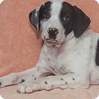 Adopt A Pet :: Wallace - Elmwood Park, NJ