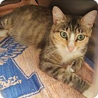 Adopt A Pet :: Fantasia - Americus, GA