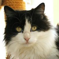 Adopt A Pet :: Mabel - Mountain Center, CA