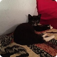 Adopt A Pet :: Anna Mae - New York, NY