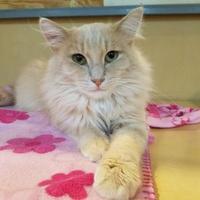 Adopt A Pet :: Leo - Marshfield, WI