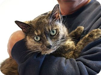 Calico Cat for adoption in Coronado, California - Jewel