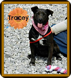 Terrier (Unknown Type, Medium) Mix Dog for adoption in Lawrenceburg, Tennessee - Tracey