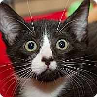 Adopt A Pet :: Ben - Irvine, CA