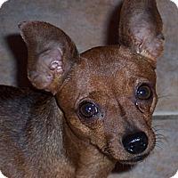 Adopt A Pet :: Scarlet - Tucson, AZ