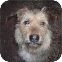 German Shepherd Dog/Terrier (Unknown Type, Medium) Mix Dog for adoption in Clay, West Virginia - Rupert