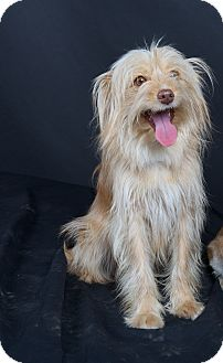 Terrier (Unknown Type, Small) Mix Dog for adoption in Nuevo, California - Lilly