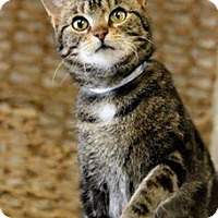 Adopt A Pet :: PIRATE! - Owenboro, KY