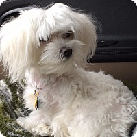 Adopt A Pet :: ZOE-ADOPTED!! - Lynnwood, WA