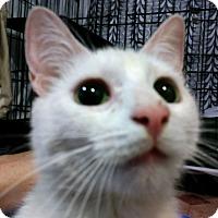 Adopt A Pet :: Marzipan - Trevose, PA