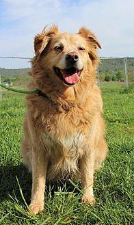 Golden Retriever Mix Dog for adoption in Capon Bridge, West Virginia - Zoey