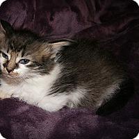 Adopt A Pet :: Anastasia - Monroe, NC