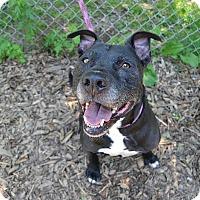 Adopt A Pet :: Kotter - Broadway, NJ
