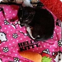 Adopt A Pet :: Cedric - West Orange, NJ