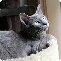 Adopt A Pet :: Charity - Marietta, GA