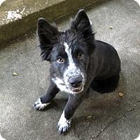 Adopt A Pet :: Bonnie Mac - San Jose, CA