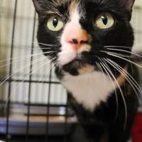 Adopt A Pet :: Payette - McCall, ID