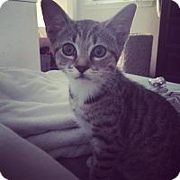 Adopt A Pet :: Pixie - Trexlertown, PA