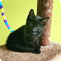 Adopt A Pet :: Robb Stark - Crown Point, IN