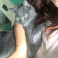 Adopt A Pet :: Evan - Warwick, RI