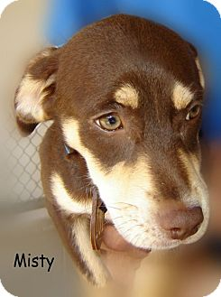 Chihuahua Mix Dog for adoption in Beaumont, Texas - Misty