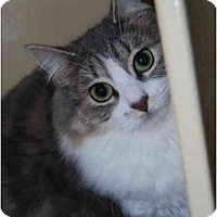Adopt A Pet :: Isabelle - Modesto, CA