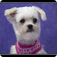 Adopt A Pet :: Emma - Fort Braff, CA
