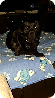 Labrador Retriever Mix Dog for adoption in Battle Creek, Michigan - Willow