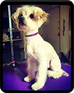 Maltese Mix Dog for adoption in Grand Bay, Alabama - Wilson