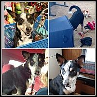Adopt A Pet :: Puppy - LANSING, MI