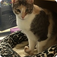 Adopt A Pet :: Lacey - Byron Center, MI