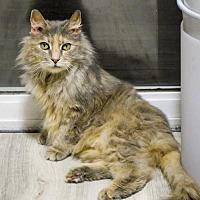Adopt A Pet :: Charlotte - Oakland, CA