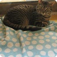 Adopt A Pet :: Saraya - Rochester, MN