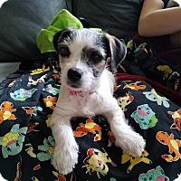 Adopt A Pet :: Belle - Oakley, CA