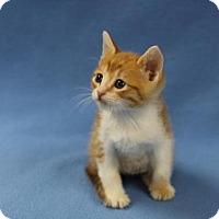 Adopt A Pet :: Simba - Walla Walla, WA