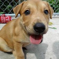 Adopt A Pet :: Davina - Fairfield, IA