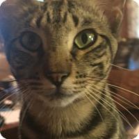 Adopt A Pet :: Hunter - White Settlement, TX