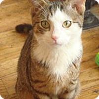 Adopt A Pet :: Taylor - Brooklyn, NY