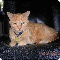 Adopt A Pet :: Morris - Union, SC