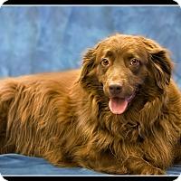 Adopt A Pet :: Candy - Wickenburg, AZ