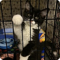 Adopt A Pet :: Tippy - Byron Center, MI