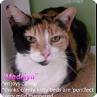 Adopt A Pet :: madelyn - Muskegon, MI