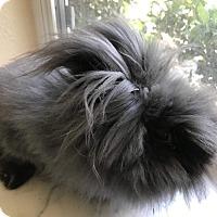 Adopt A Pet :: Bianca - West Palm Beach, FL