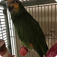 Adopt A Pet :: Pepito - Punta Gorda, FL