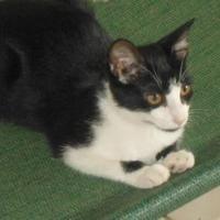 Adopt A Pet :: Diego 0321 - Jacksonville, FL