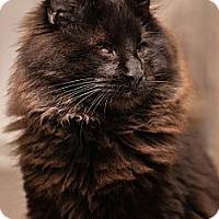 Adopt A Pet :: Ebony (and Harmony) - San Rafael, CA